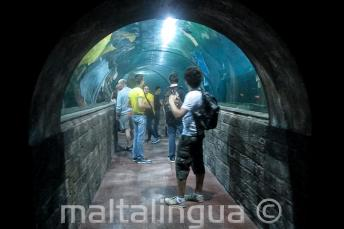 Students in an aquarium tunnel
